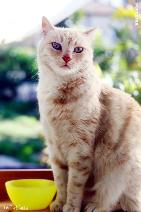 ממרח בוטנים | להחביא מהחתול | צילום: טלי שיאצו